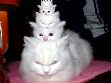 funny-cats-673[1]