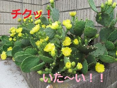 IMG_0870-s.jpg