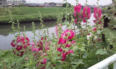 Photo021-s_20110822001653.jpg