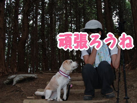 2010・05・22葛城山m