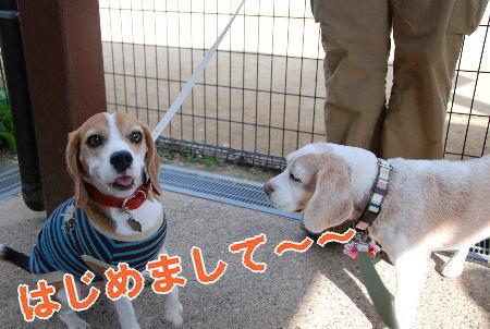 2009・11・01ビーズ&のん
