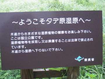 タデ原湿原1
