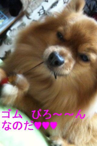 IMG_6807_20100113230529.jpg