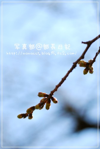 DSC_3424.jpg
