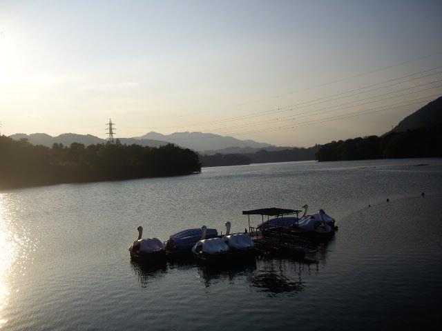 津久井湖のスワン