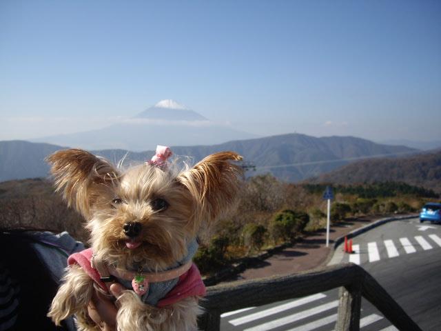 今度はノンちゃんと富士山
