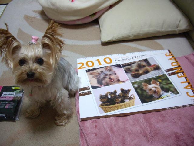 2010年のカレンダーが届きました