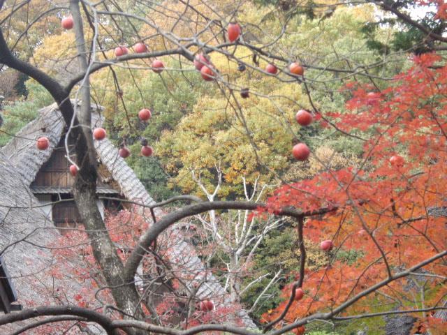 日本民家と柿ともみじ