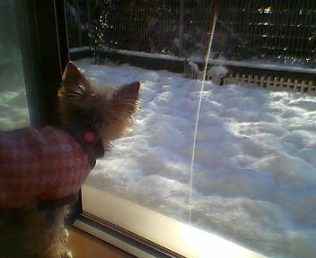 05.1.1初めての雪