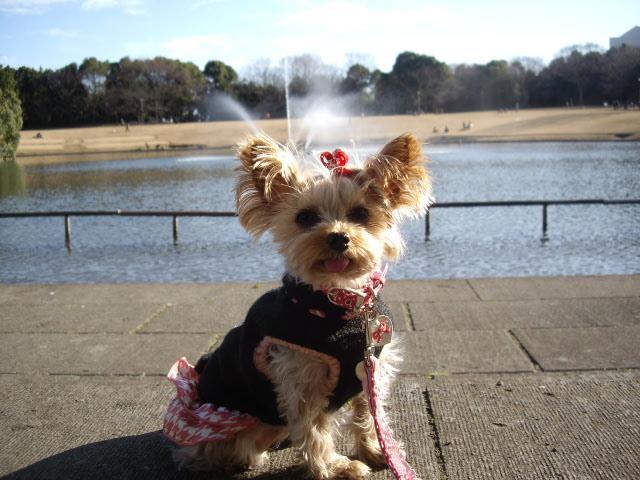 ちょっと寒いけど公園でお写真よ