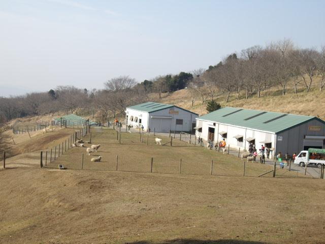 ひつじの牧場