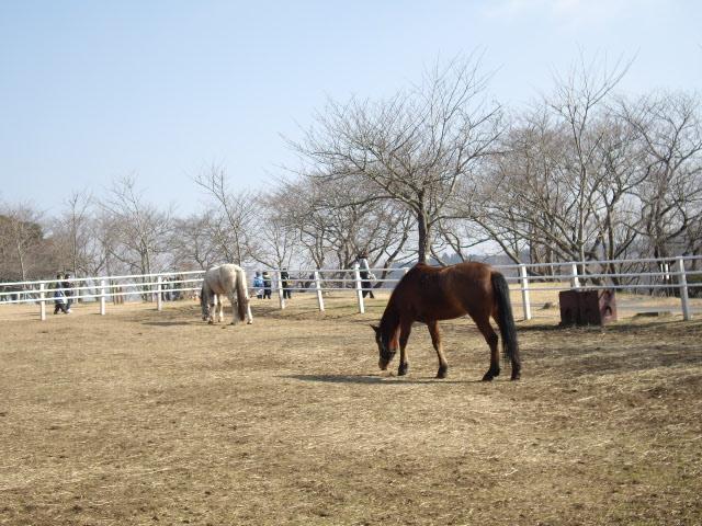 キレイな馬さん