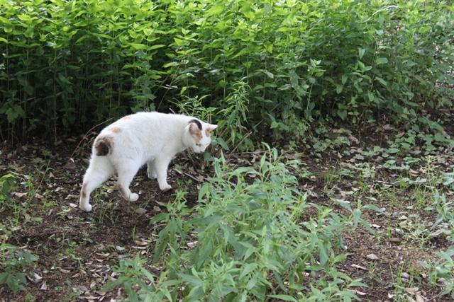 ネコちゃんも涼しい場所を求めて散策ですか