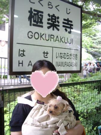 コピー ~ 極楽寺に来ました