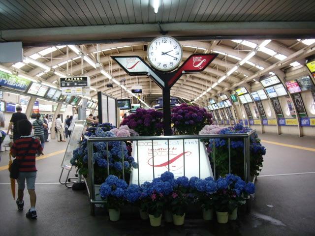 駅の中の紫陽花