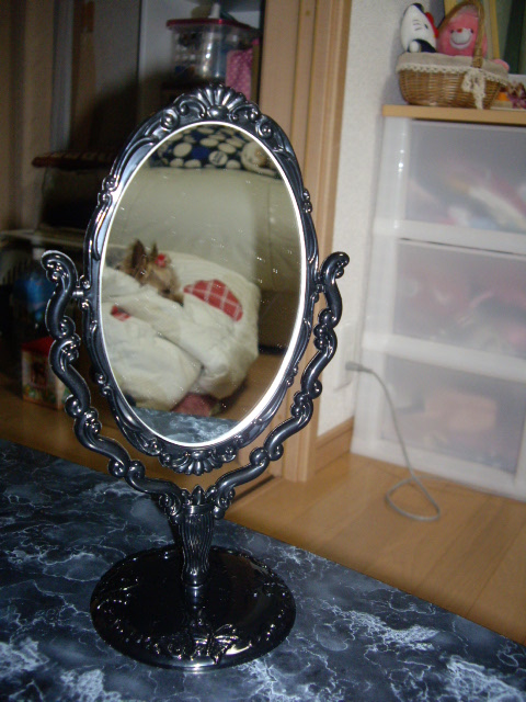 鏡の中にノンタン発見