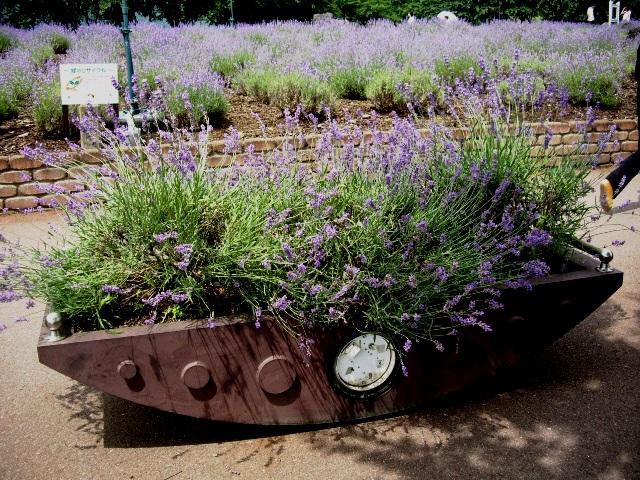 ラベンダーの花壇