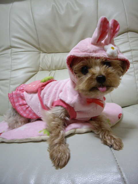 あたちはウサギにはなりたくなかったけどこんなのママが買ってきたにょ♪