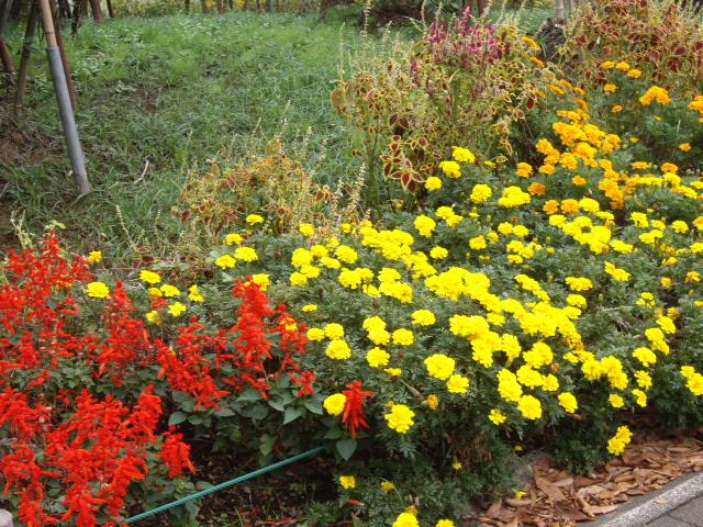 秋らしいお花もいっぱいだね