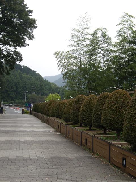 秋を感じて公園散歩に行きます~