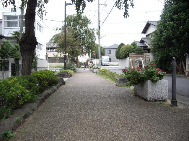 緑道のお散歩