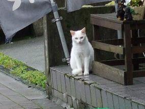 cat20100715_002