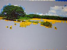 jigsaw_SunflowerFieldUmbria_2016_008