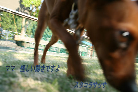 yamanoue2-9.jpg