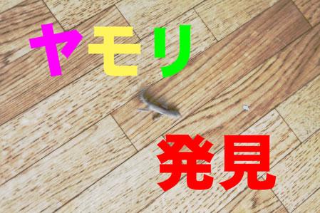 yamori.jpg