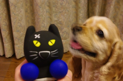 s-黒猫おもちゃ2