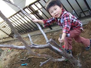 木とちょびん1