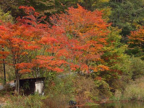 トンボ池の紅葉