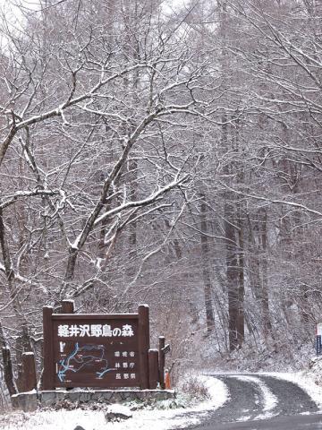 野鳥の森入口111202