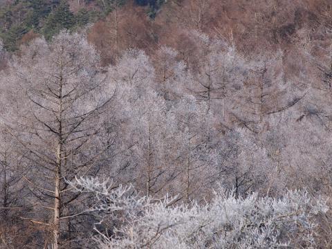 霧氷111219-1