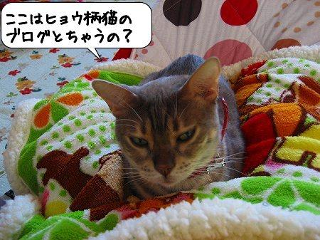 20091107_001456.jpg