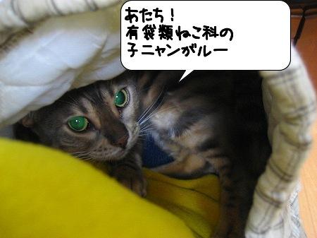 20091109_230734.jpg