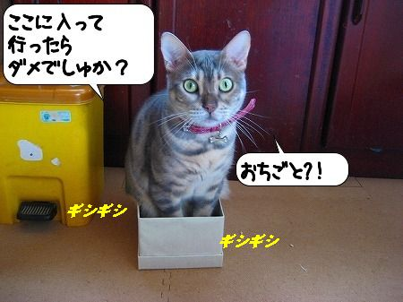 20091114_141817.jpg