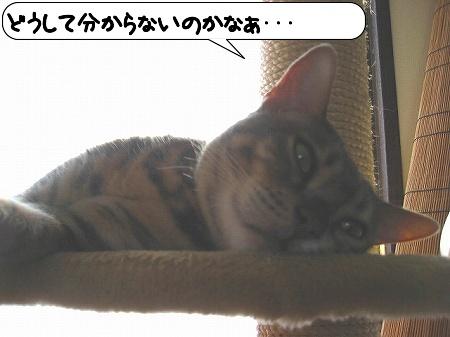 20091115_221942.jpg