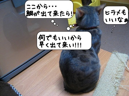 20091119_225415.jpg