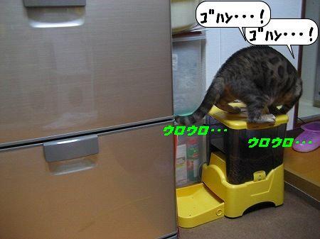 20091119_232036.jpg