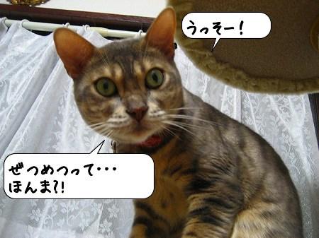 20091121_153600.jpg