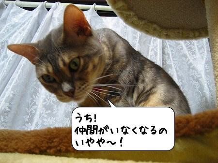 20091121_154829.jpg