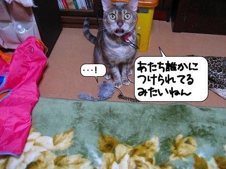 20091205_001640.jpg