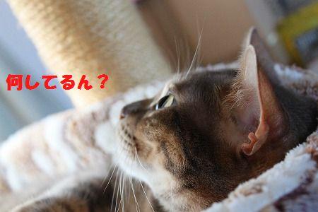 IMG_4329.jpg