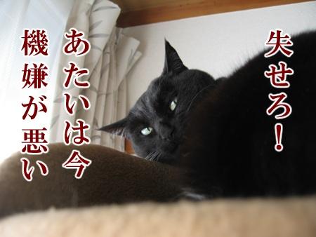 20100206_04.jpg