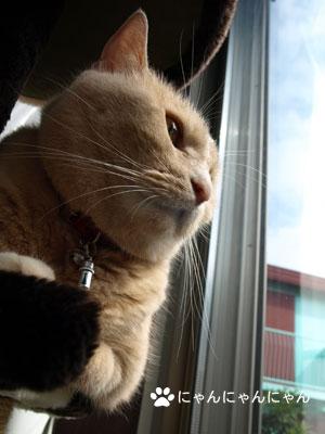 外を眺めるくぅ姐さん1