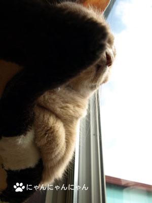 外を眺めるくぅ姐さん2