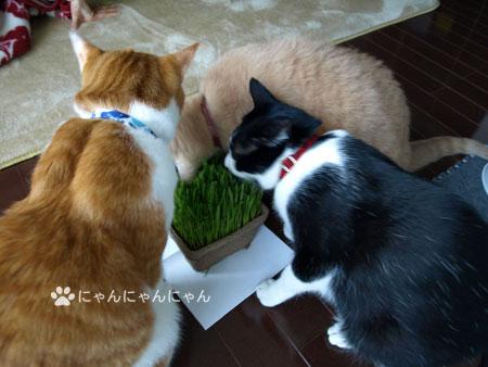猫草の争奪戦1