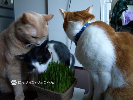 猫草の争奪戦3