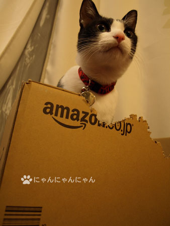 New_box4